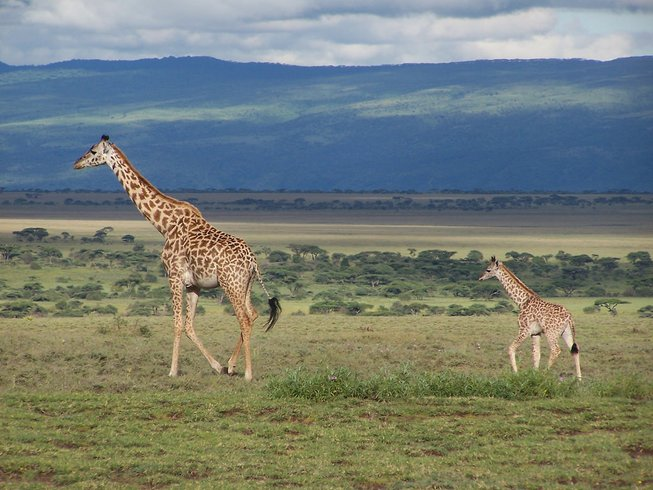 11 Days Tanzania Safari and Honeymoon