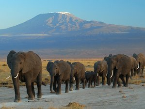 8 Day Kenya Wildlife Safari