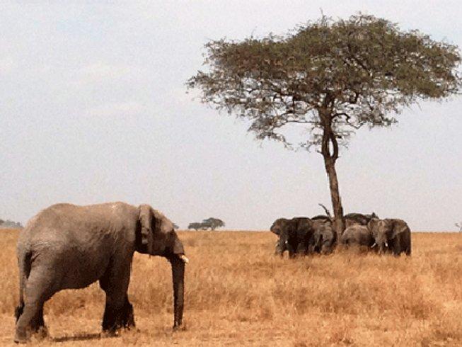 11 días safari, playa y retiro de yoga en Zanzíbar