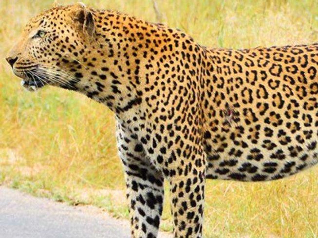 5 Days Backpackers Kruger Park Safaris