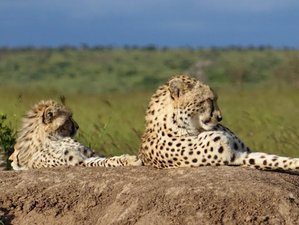 5 Days Small Group Safari in Serengeti National Park and Ngorongoro Crater, Tanzania