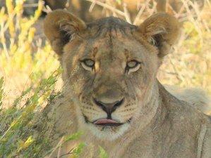 10 Days North Eastern Safari in Namibia
