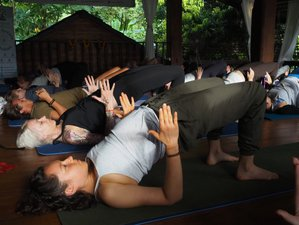 51 Days 500 Hours Hatha & Ashtanga Vinyasa Yoga Teacher Training in Chiangmai, Thailand