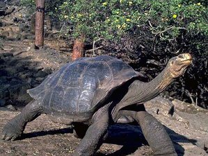 4 Day Amazing Wildlife Tour with Snorkeling in Galapagos Island, Ecuador