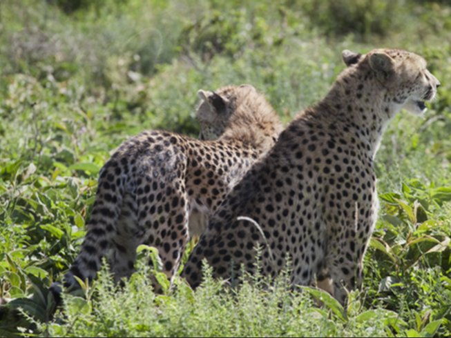 4 Days Tarangire, Ngorongoro, and Serengeti Camping Safaris in Tanzania
