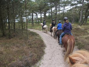 4 Day Weekend Horse Riding Holiday in Rømø Island