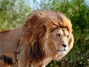 6 Days Thrilling Kenya Safari