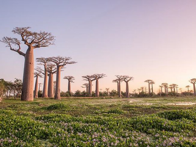 16 Days Luxury Photography Safari Madagascar