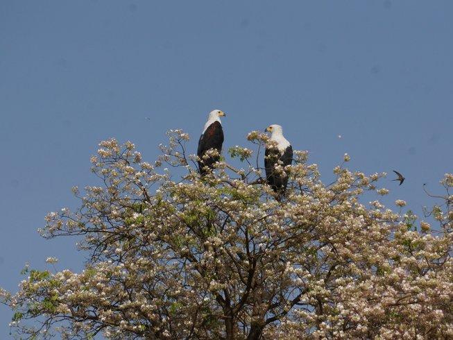 3 Days Wildlife Safari in Murchison Falls National Park