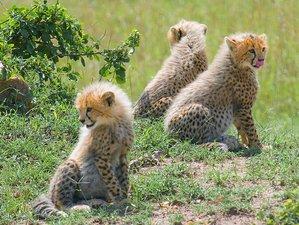 3 Days Camping Safari in Maasai Mara, Kenya