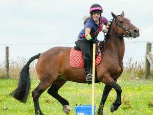 6 Days Teen Horse Riding Holiday Wales, UK