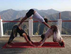 31 Days 200-hour Hatha Yoga Teacher Training in Dharamsala
