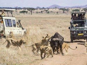 8 Days Lodge Safari in Tanzania