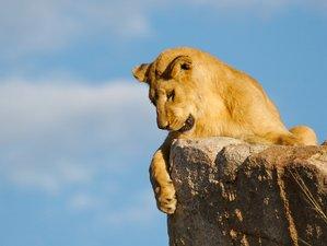 16 Days Exhilarating Safari in Kenya, Tanzania, and Victoria Falls