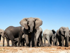 10 Days African Safari in Zimbabwe