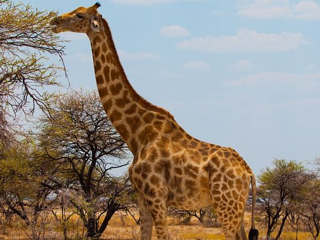 6 Days Cape Town Tour and Safari in Kruger National Park