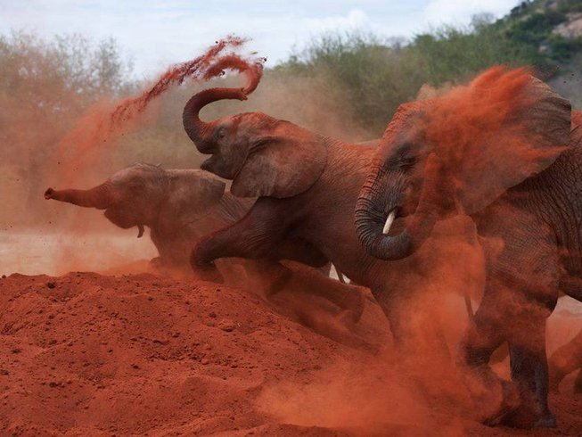 2 Days Red Elephant Safari in Kenya