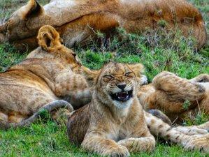 14 Days Beach Holiday and Great Migration Safari in Kenya