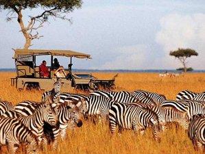 3 Days Triangle Safari in Tanzania