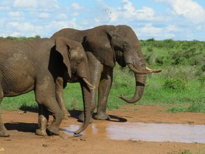 4 Days Family-Friendly Safari in Kruger National Park, South Africa
