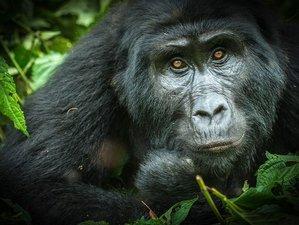 5 Days Gorilla Trekking Safari in Uganda and Virunga Mountain Hiking