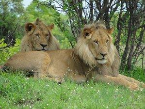 4 Days Awesome Bush Horizons Safari in Kafue National Park, Zambia
