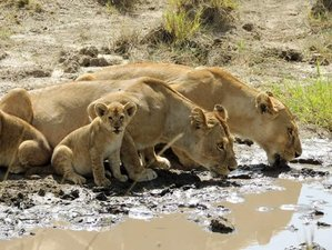 3 Days Maasai Mara Joining Tour & Safari in Kenya