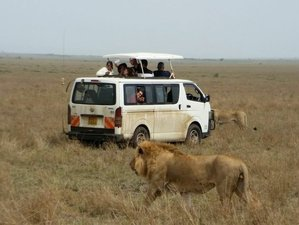 6 Days Budget Safari in Kenya
