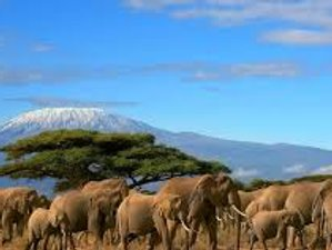 3 Days All-Inclusive, Family-Friendly Safari in Amboseli National Park, Kenya