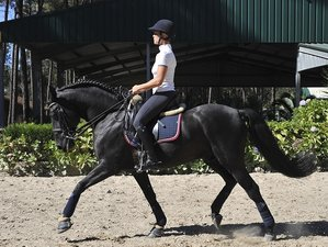 7 Days Gold Program for Show Jumping and/or Dressage in Esposende, Portugal