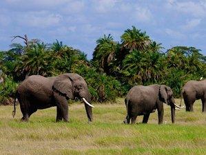 4 Days Guided Safari in Tsavo East and Taita Hills, Kenya