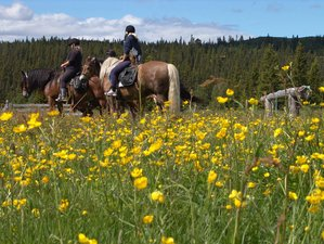 5 Day Yoga and Beginner Horse Riding Holiday in Venabygd