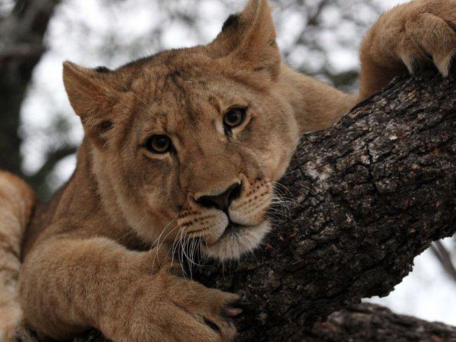 7 Days Exciting Game Drives and Wildlife Safari in Western Region, Uganda