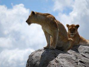 11 Days Wildlife Adventure Safari and Zanzibar Beach Holiday in Tanzania