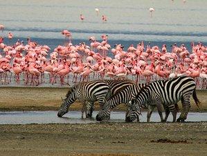 7 Days Adventurous Safari in Tanzania