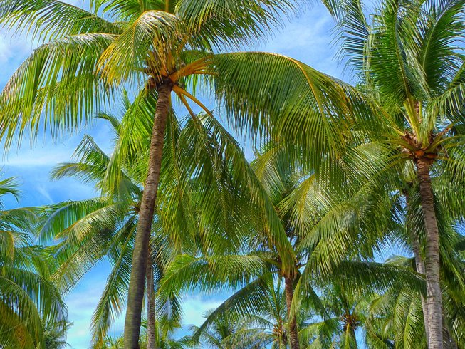 6-Daagse Meditatie en Yoga Retraite in Sosua, Dominicaanse Republiek