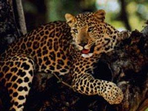 4 Day Bird Watching and Tiger Tracking Safari in Bardiya, Bheri Zone