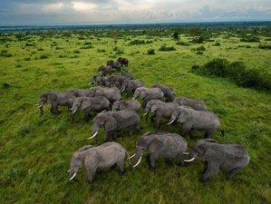 4 Days Uganda Safari in Murchison Falls National Park