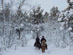 4 Days Winter Horse Riding Holiday Adventure in Kiruna, Sweden