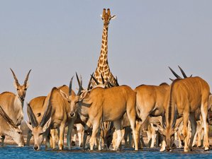 8 Days Breathtaking Safari in Namibia