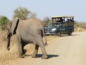 5 Days Classic Big Five Safari in Balule Nature Reserve and Kruger National Park, South Africa