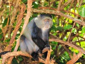 4 Days Jambo Safari in Tanzania
