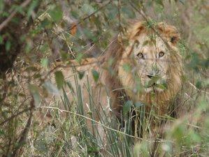 14 Days Guided Safari in Kenya
