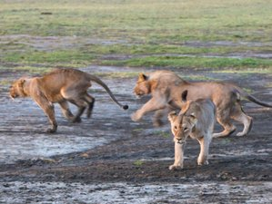 4 Days Memorable Safari in Tanzania