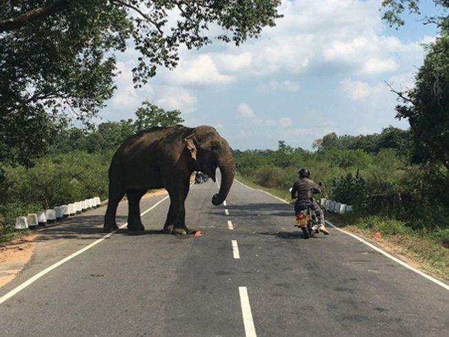 13 Days Royal Enfield Sri Lanka Motorbike Tour