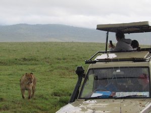 8 Days Calving Season Safari in Tanzania