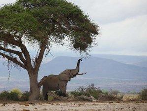 4 Days Touch of Wildlife Safari in Amboseli and Tsavo East National Park, Kenya