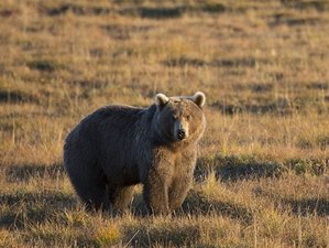 15 Day Kamchatka Volcanic Wonderland in the Realm of the Brown Bear Safari in Russia