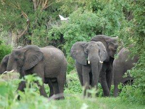5 Days Livingstone and Surroundings Safari in Zambia and Botswana