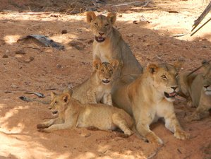 4 Days Kilimanjaro Special Safari in Kenya